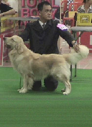 Mr. Gan Wee Yet and Blade, Golden Retriever